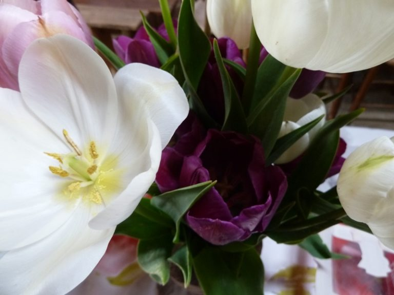 Tulipes contre le cancer (1)